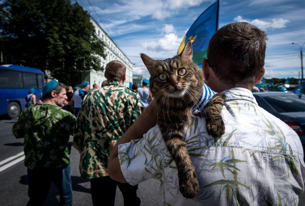 قط، أيضاً، يشارك احتفال صاحبه بعيد قوات الإنزال الجوي الروسية في مدينة سانت بطرسبورغ، روسيا.