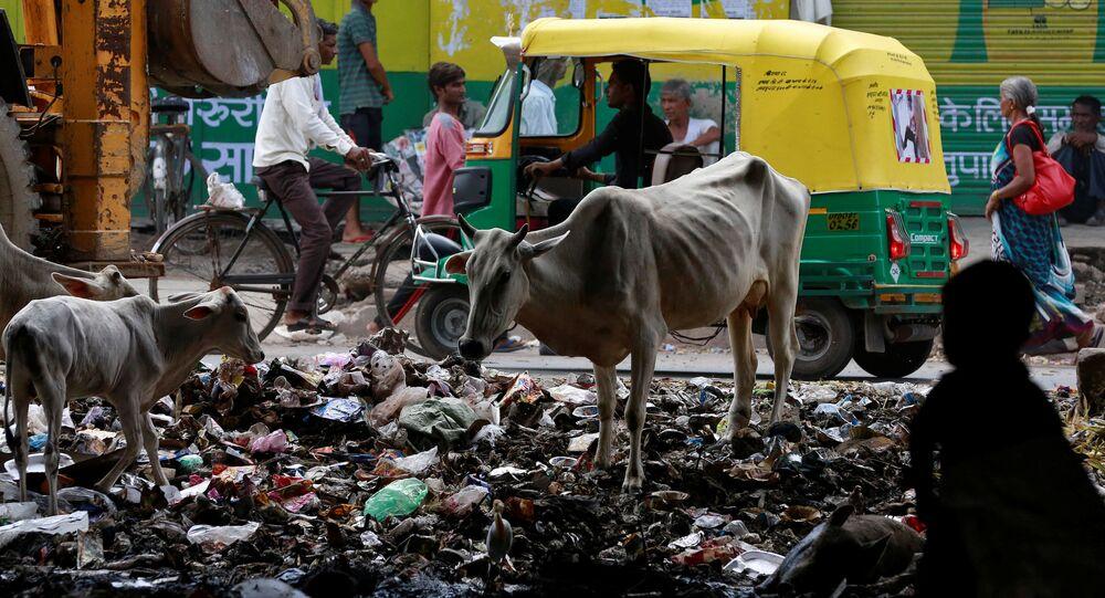الأبقار تقف وسط القمامة في أحد شوارع مدينة أغرا، الهند 8 أغسطس/ آب 2016