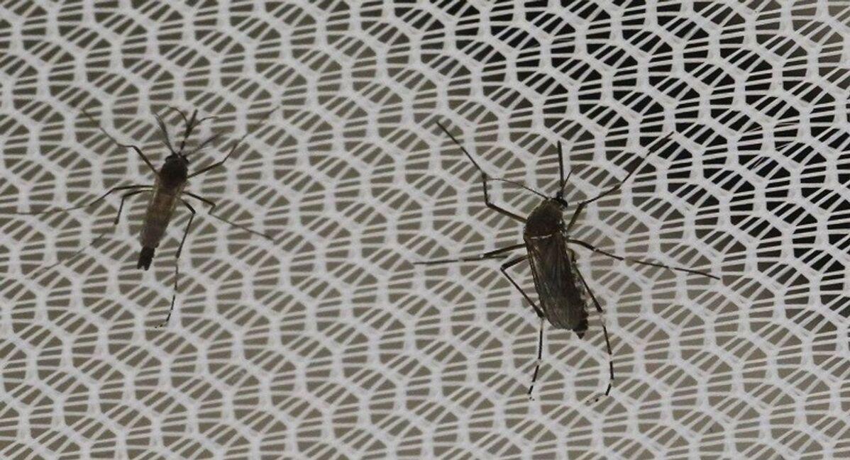 حقيقة الحشرات السوداء المنتشرة في السعودية والعراق وسوريا Sputnik Arabic