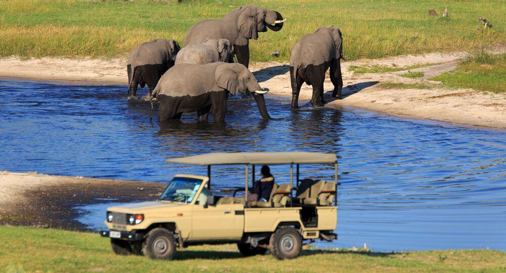 اليوم العالمي للسياحة - زيارة الفيَلة في سفاري بارك.