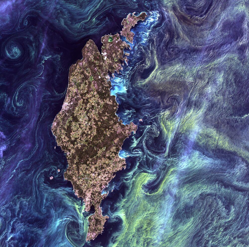 لوحة فان غوغ من الفضاء - تراكمات هائلة من العوالق النباتية في المياه الداكنة حول جزيرة غوتلاند في بحر البلطيق