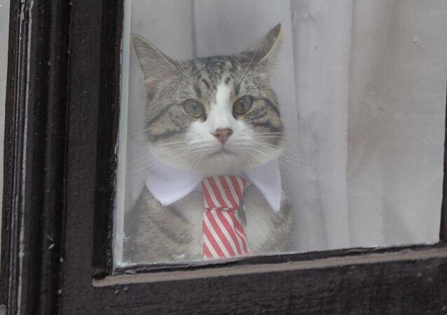 قطة أسانج تلبس ربطة عنق