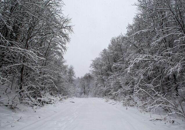 طريق مغطى بثلج كثيف وسط غابة بجمهورية كاريليا
