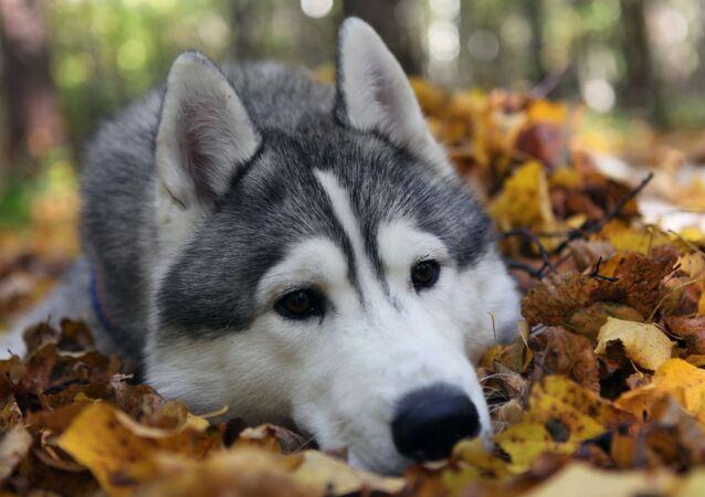 كلبة عابرة للزمن