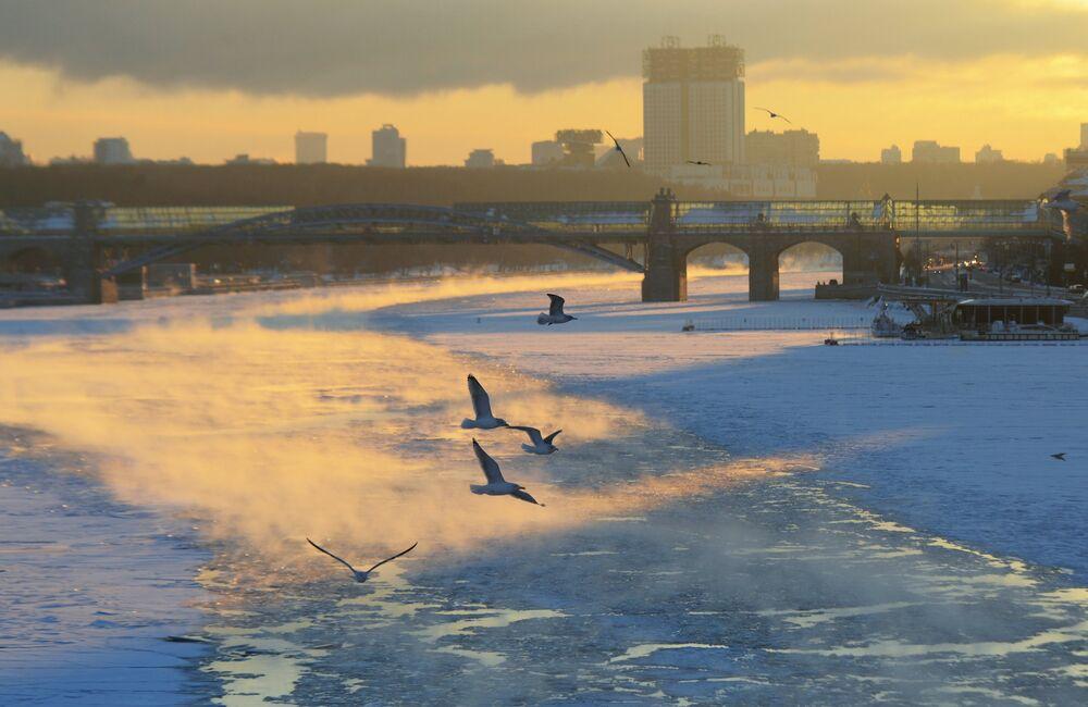 طيور النورس تحلق فوق نهر موسكو ودرجة الحرارة 27 تحت الصفر