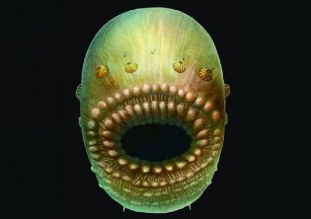 سلف الإنسان ذو الـ450 مليون سنة