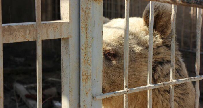 حديقة حيوانات الموصل