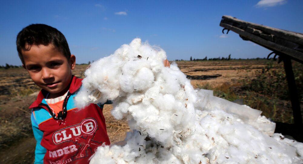 زراعة القطن في مصر