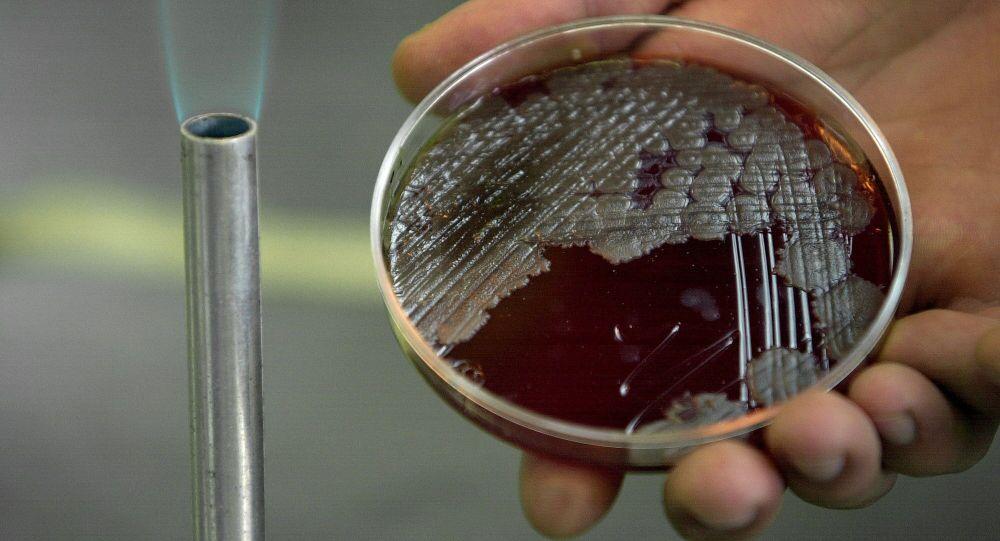 بكتيريا