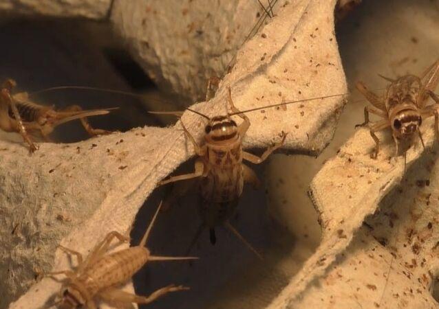 كوكتيل من الحشرات
