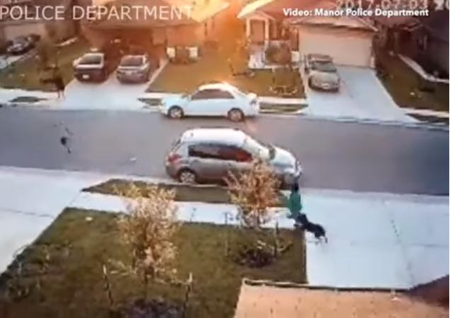 مهاجمة كلب لطفل
