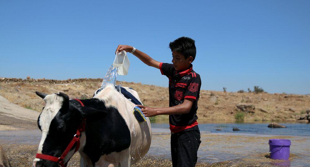 طفل سوري في القنيطرة