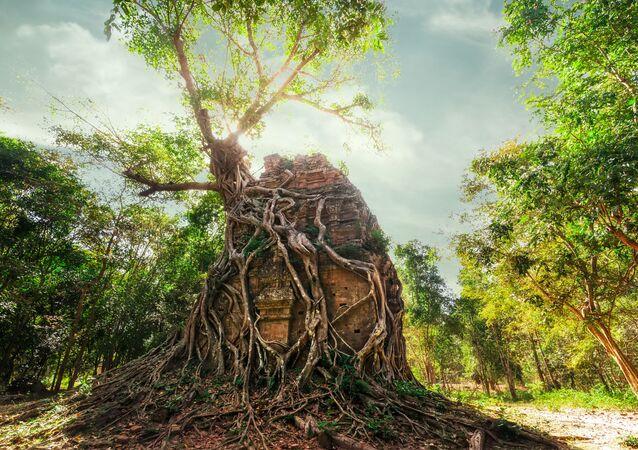 مجمع مير بري أنغكور، يحوي معبد سامبور بري كوك في عمق غابات كمبوديا لممارسة الطقوس الدينية. يعود تاريخ بنائه إلى آلاف السيني خلال حكم الخمير وهو شعب قديم كان يسكن جنوب شرق آسيا.