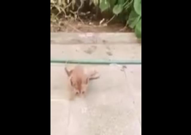 قطة مشلولة