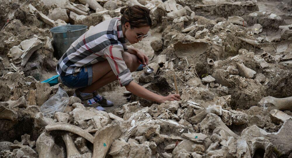 عملية تنظيف عظام لهيكل ماموث يعود إلى العصر الحجري القديم، وجدت خلال الحفريات الأثرية على أراضي المتحف احتياطي كوستينكو في منطقة فورونيج، روسيا