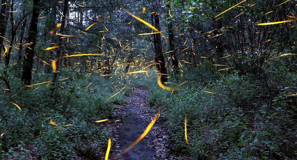 غابات - أرشيفية