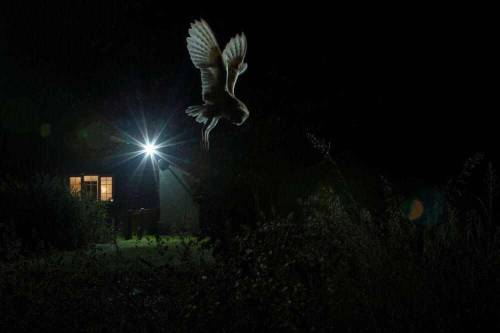 جائزة أفضل مصور طيور لعام 2017 - صورة لطائر البومة يحلق بالقرب من منزل، في فئة طيور في بستان للمصور جامي هول