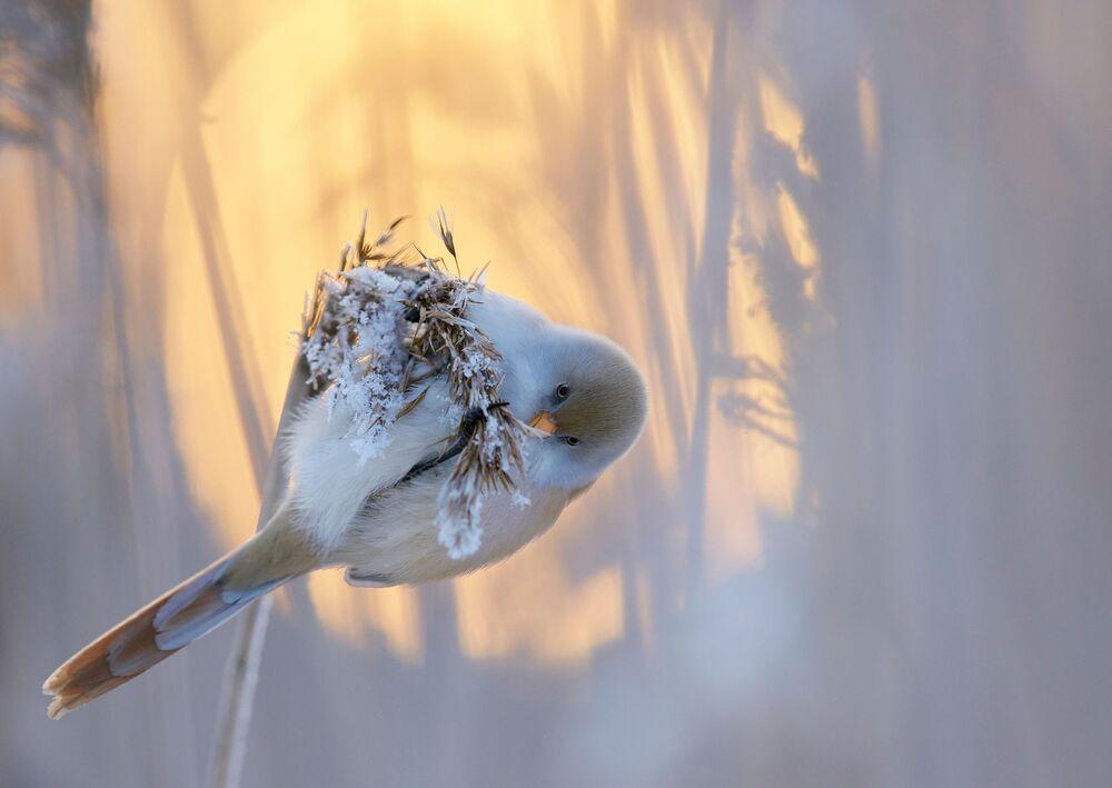 جائزة أفضل مصور طيور لعام 2017 - صورة لطائر قرقف أبو ذقن، في فئة أفضل لوحة للمصور ماركوس فاريسوفو