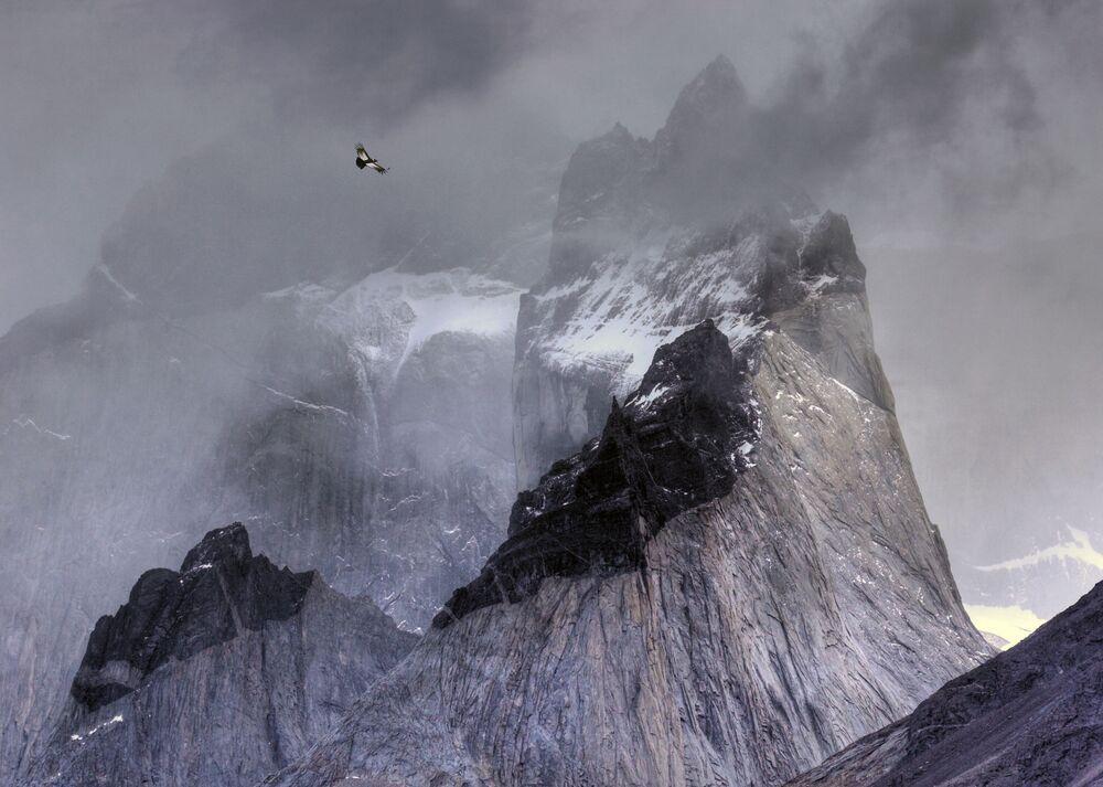 جائزة أفضل مصور طيور لعام 2017 - صورة لطائر كندور الأنديز، في فئة الطيور والبيئة للمصور بين هول