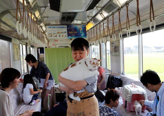 قطط تتجول في قطار باليابان