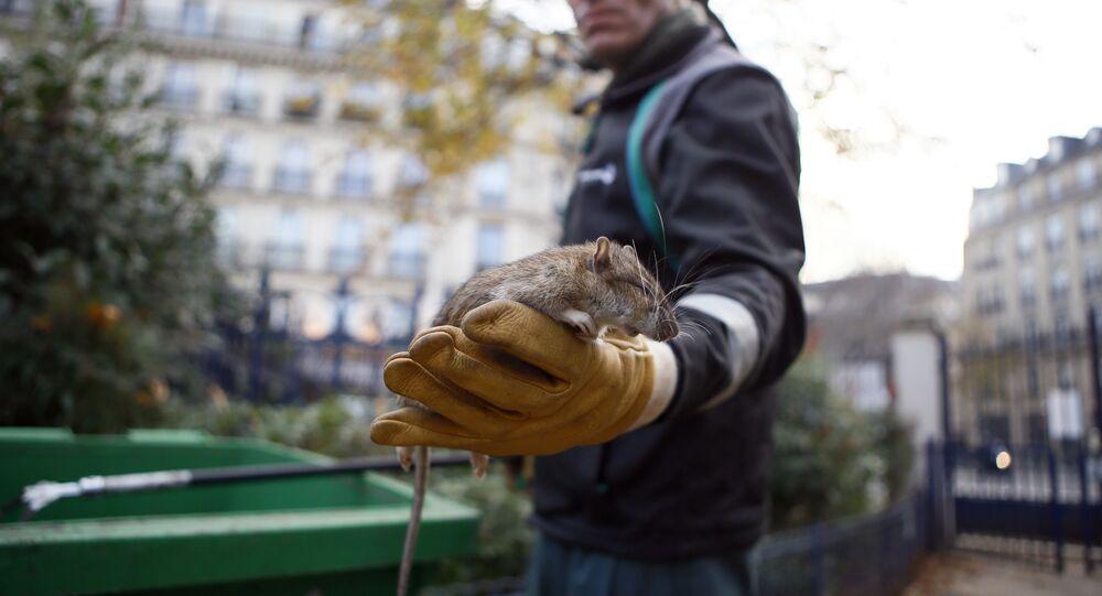 مكافحة الفئران في باريس