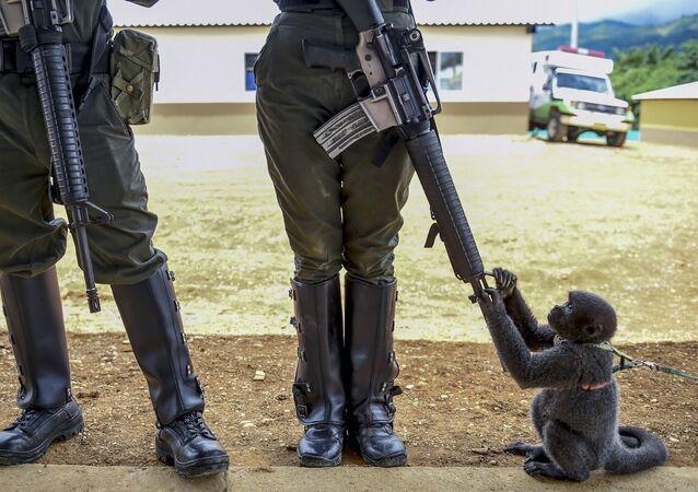 قرد صغير يلعب بفوهة بندقية جندية كولومبية في منطقة غير مسلحة تعرف بـ مساحات للتدريب الإقليمي وإعادة الإدماج في أغوا بونيتا، كولومبيا 25 أكتوبر/ تشرين الأول 2017
