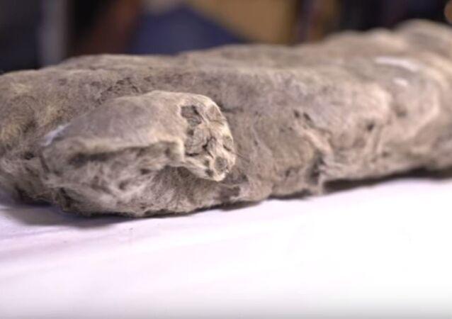جثة أسد الكهف