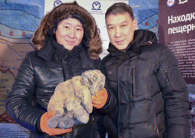 العثور في روسيا على جثة شبل أسد الكهوف في نوفمبر 2015