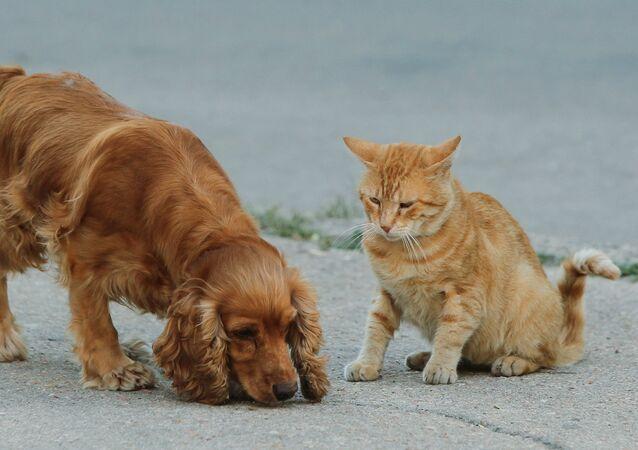 الكلاب والقطط