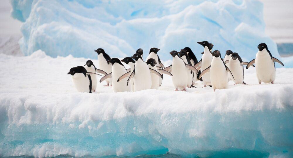 طيور البطريق في القطب الجنوبي