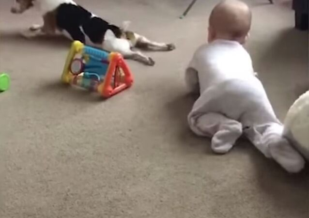 طفل و كلب يلعبان