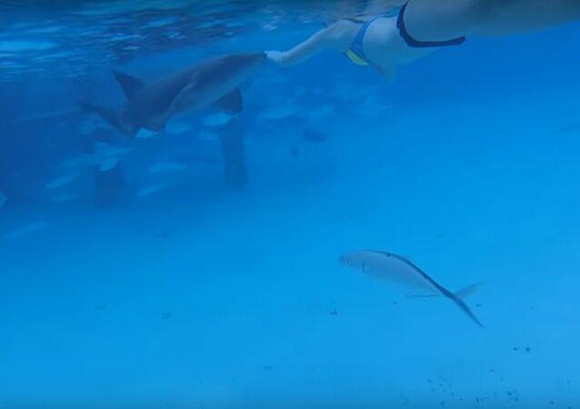 فتاة تتعرض لهجوم من سمكة قرش