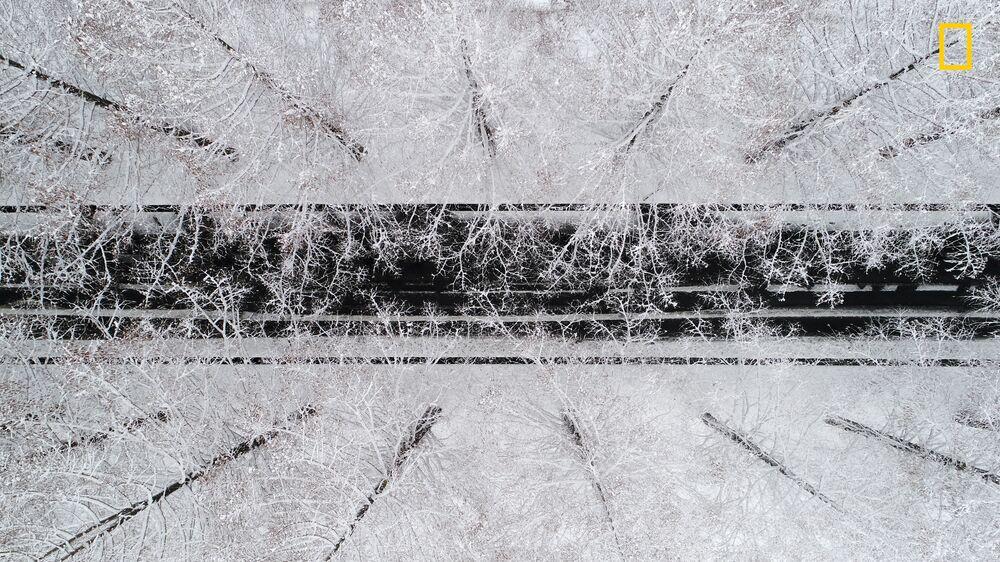 مسابقة ناشيونال جيوغرافيك للطبيعة لعام 2017 - المصور تكاهيرو بيشو، صورة بعنوان أشجار ميتاسكويا المغطاة بالثلوج (Snow-covered metasequoia trees) في تاكاشيما، اليابان