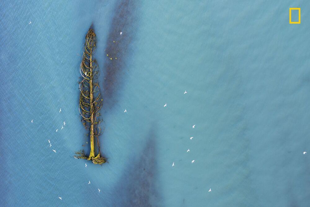 مسابقة ناشيونال جيوغرافيك للطبيعة لعام 2017 - المصور أغاثي برنارد، صورة بعنوان النوارس المهاجرة (Migratory gulls) في بريتيش كولومبيا، كندا