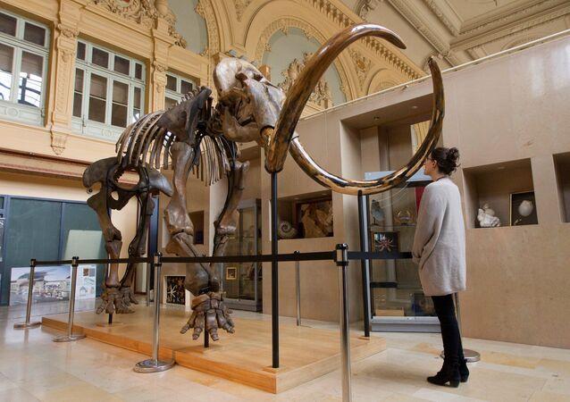 بيع هيكل فيل منقرض مقابل 548 ألف يورو في فرنسا