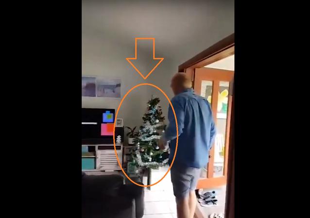 العثور على ضيف مرعب في شجرة الكريسماس