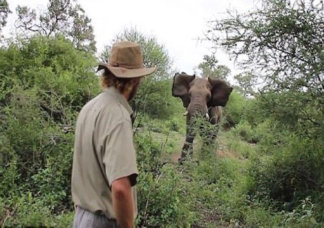 رجل يواجه فيل غاضب
