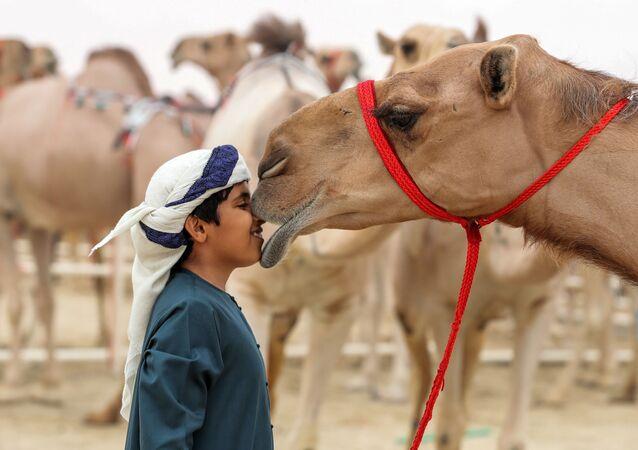 مهرجان الظفرة للإبل في أبو ظبي، الإمارات المتحدة، 23 ديسمبر/ كانون الأول 2017