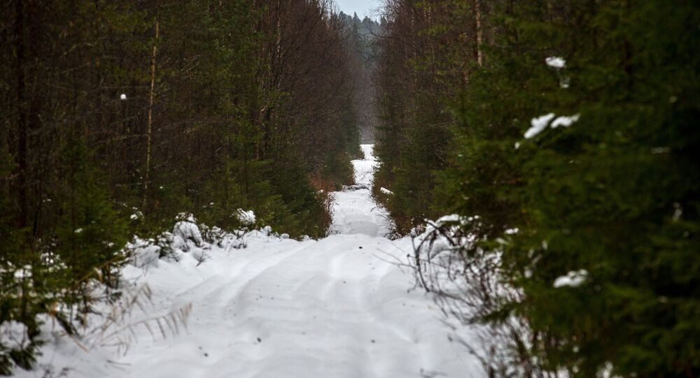 غابة ثلج