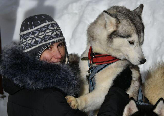 سباق كلاب هاسكي لاغوناكي 2018 في كراسنودارسكي كراي