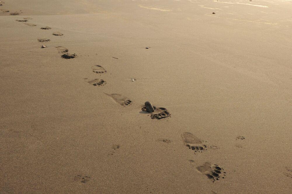 آثار دب الكوريل على شاطئ جزيرة كوناشير بالمحمية الطبيعية