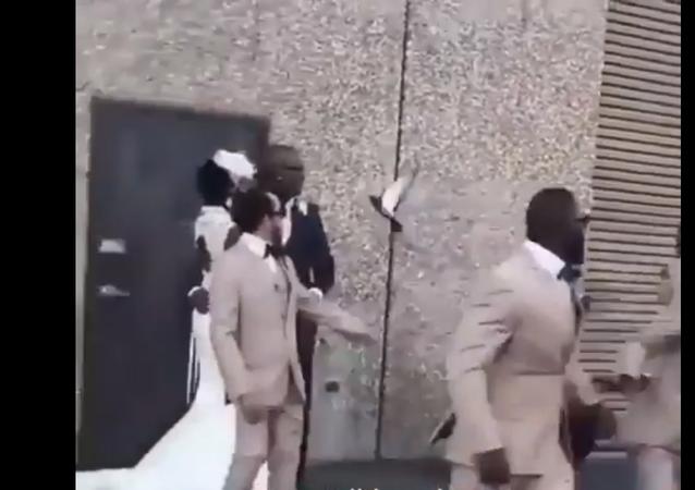 حمامة تسبب الحرج لعروس أثناء حفل زفافها