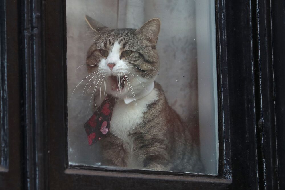 القط جيمس يطل من نافذة سفارة إكوادور، حيث يقيم مؤسس ويكيليكس جوليا أسانج، في لندن، بريطانيا 6 فبراير/ شياط 2018