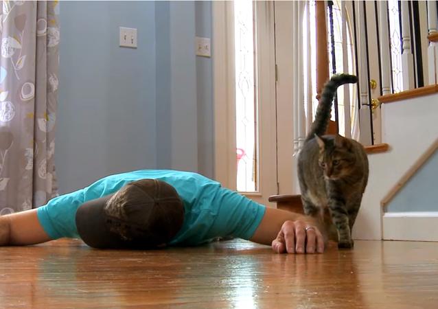 رد فعل القط على موت صاحبه