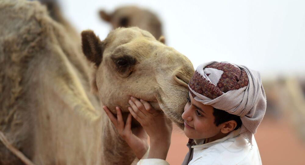 صبي يلتقط صورة مع جمل في مهرجان الملك عبد العزيز للإبل في رماح، على بعد 150 كلم شرق الرياض، في 29 مارس/ آذار 2017.