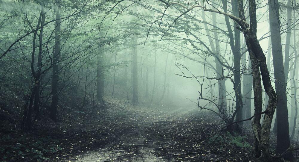 غابة هويا-باكيو في ترانسيلفانيا، رومانيا. أو غابة مثلث برمودا، كما يسميها المحليون. إذ أن كل من يتوجه إلى الغابة يشكو من آلام في الجسد، ويشعر بالغثيان والتقيؤ، والصداع المصفي، وتصيبه الخدوش والحروق.