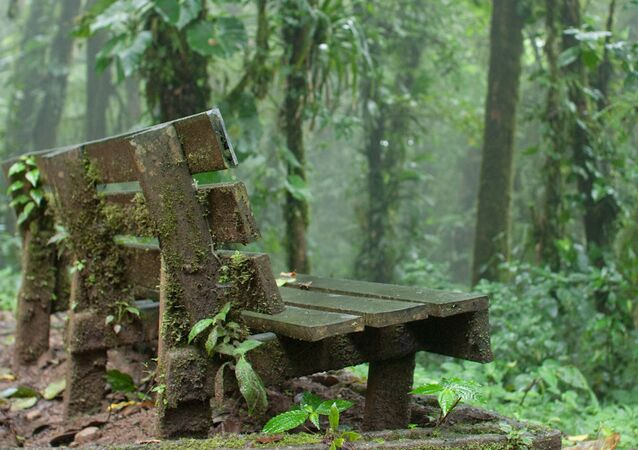 غابة مونتيفيردي في كوستا ريكا - تتميز بالغيوم الكثيفة المنخفضة جدا وغزارة الأمطار طوال الوقت تقريبا