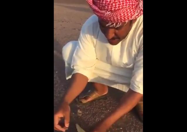 شاهد ماذا وجد سعودي داخل بطن ضب