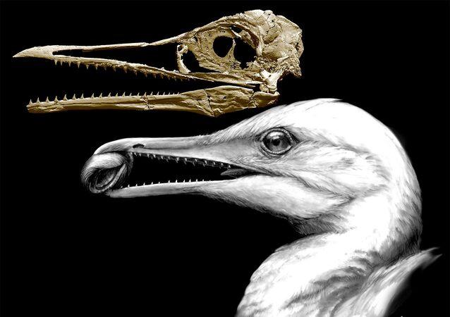 الإكثور أو طائر السمك