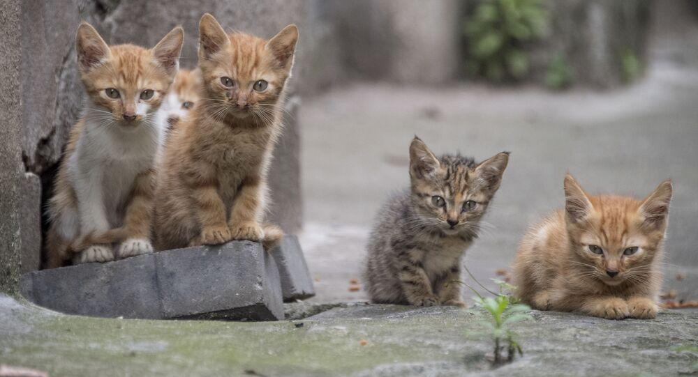 خمس قطط صغيرة في شارع في شنغهاي، 28 مايو/ أيار 2018
